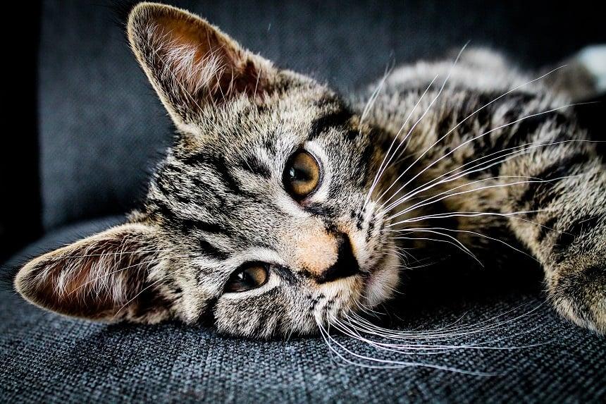 Best Beatrise Cat Furniture