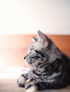 pet tags for less cat